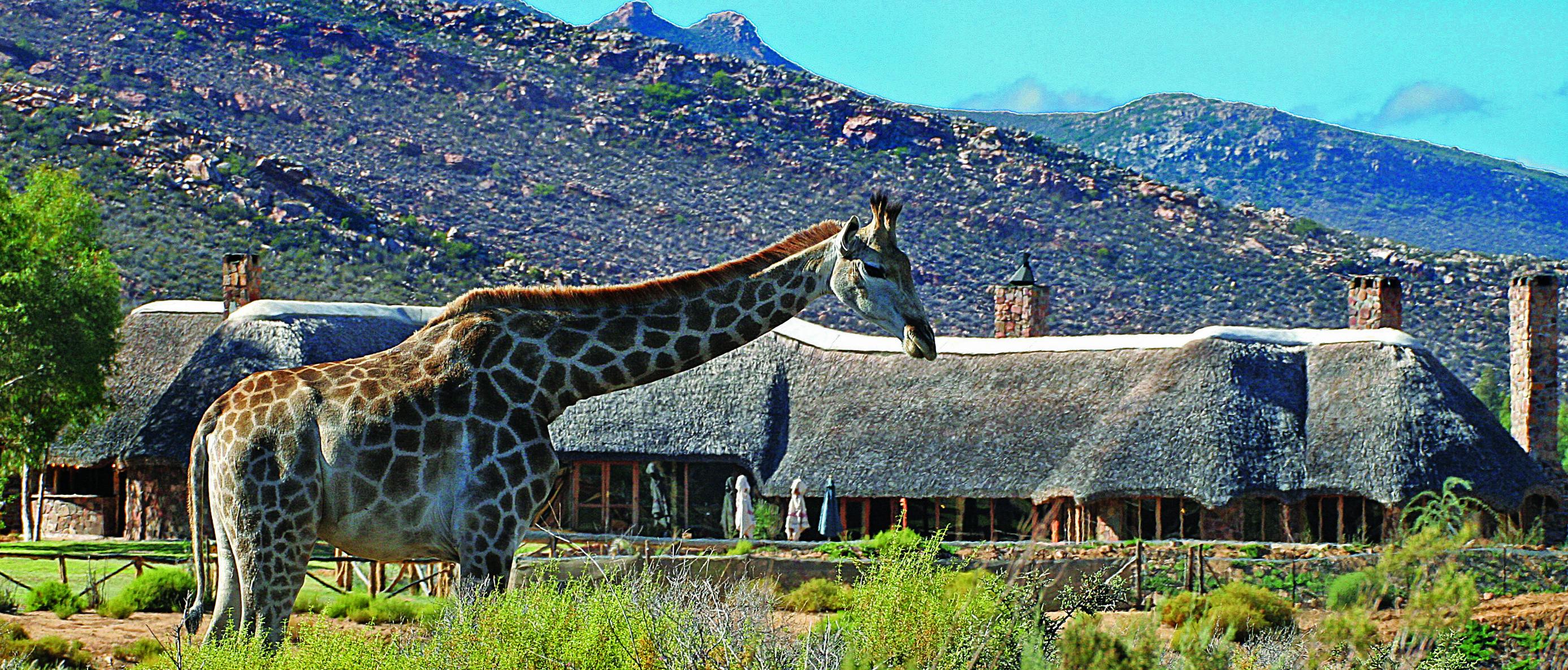 Giraffe & restaurant_
